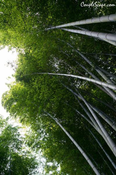 ป่าไผ่