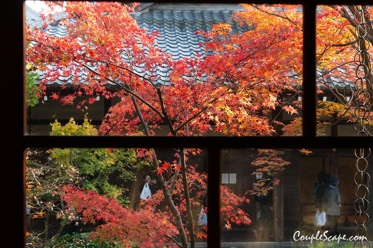 เที่ยวคันไซ ตอนที่ 5 เดินทางสู่เกียวโต ชมความงามของฤดูใบไม้ร่วงที่วัด Eikando