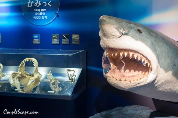 พิพิธภัณฑ์ฉลาม