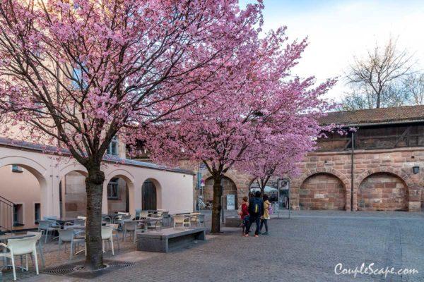 Nuremberg Cherry Blossom